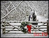 Pferd im Schnee und ein Kranz auf dem Zaun,  #auf #dem #ein #Kranz #Pferd #Schnee #und #Winte…