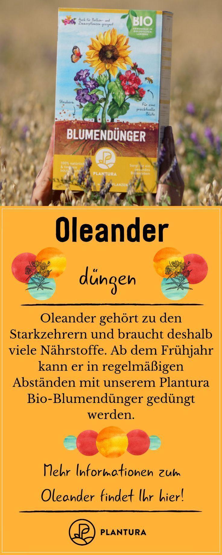 Oleander: Experten-Tipps zum Pflanzen, Schneiden, Überwintern & Co - #ExpertenTipps #Oleander #Pflanzen #Schneiden #überwintern #zum #immergrünesträucher Oleander: Experten-Tipps zum Pflanzen, Schneiden, Überwintern & Co - #ExpertenTipps #Oleander #Pflanzen #Schneiden #überwintern #zum #immergrünesträucher Oleander: Experten-Tipps zum Pflanzen, Schneiden, Überwintern & Co - #ExpertenTipps #Oleander #Pflanzen #Schneiden #überwintern #zum #immergrünesträucher Oleander: Experten-Tipps z #immergrünesträucher