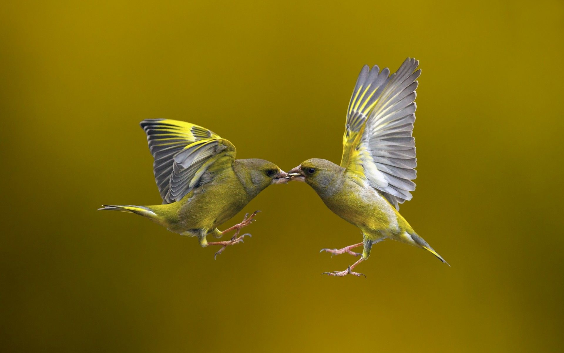 Animal Bird Wallpaper (With images) Shutter speed, Birds