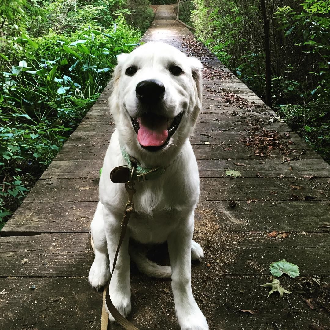 3 Training Exercises To Perfect Your Dog 39 S Manners For Life