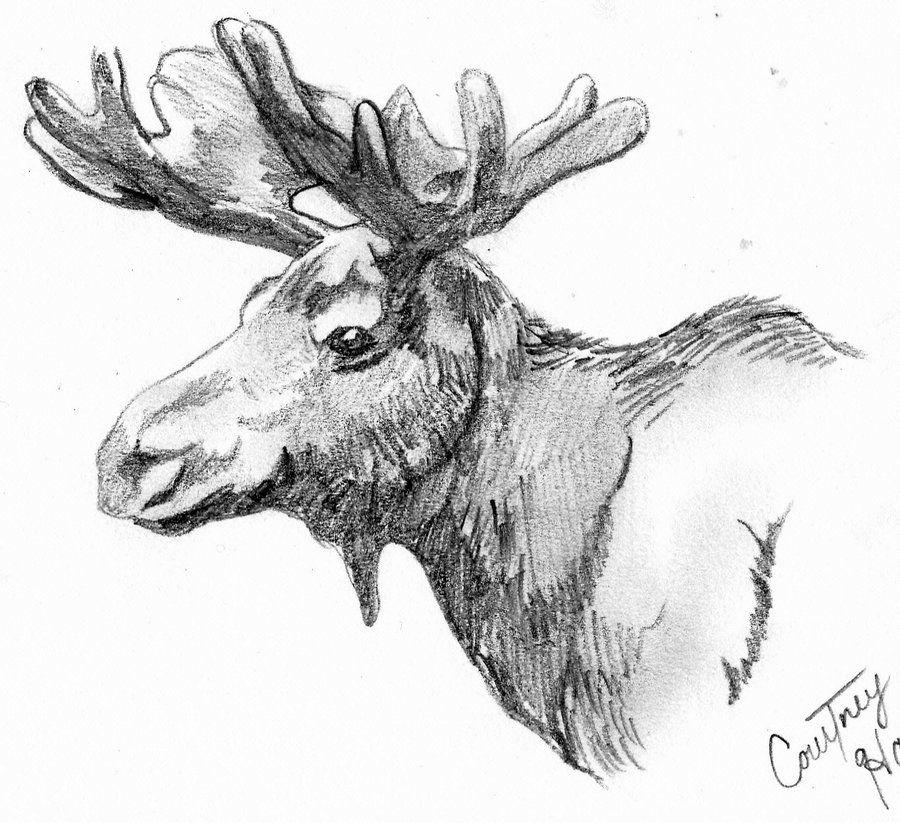 moose drawings - Google Search | Illustrations | Pinterest ...