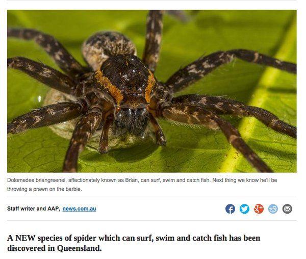 Baroness Wear A Mask Dr Rachael On Twitter Australian Spider Spider Spiders In Australia