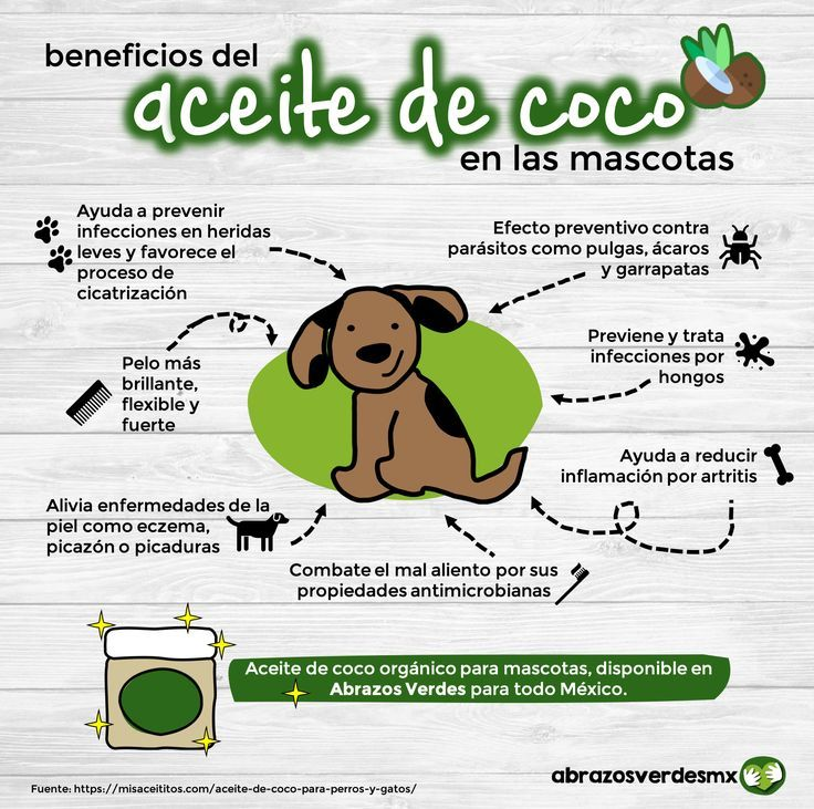 170 Ideas De Mascotas En 2021 Mascotas Cosas Para Perros Perros