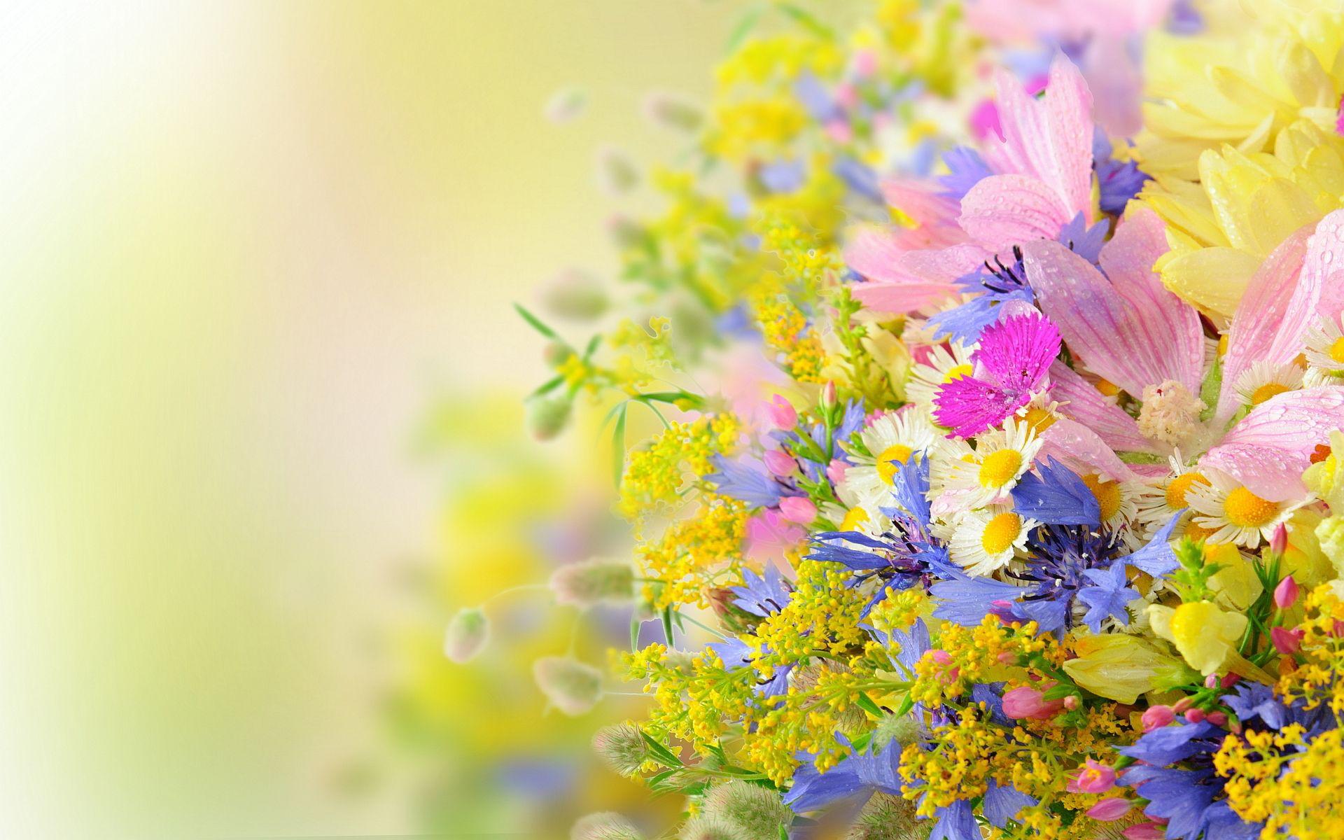 23 amazing flowers ndash - photo #38