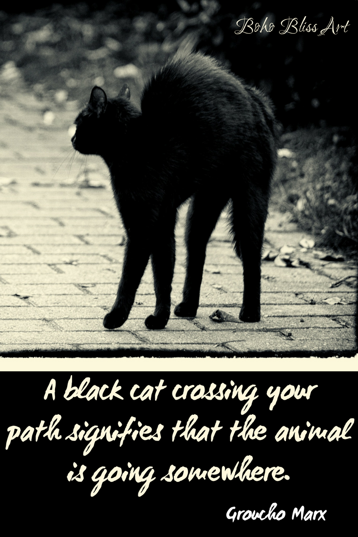 Black Cats Praising the Mini Panther Cat quotes, Cats