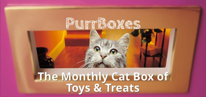 Purrboxes Monthly Cat Treat Box That Will Make Them Purr Cat