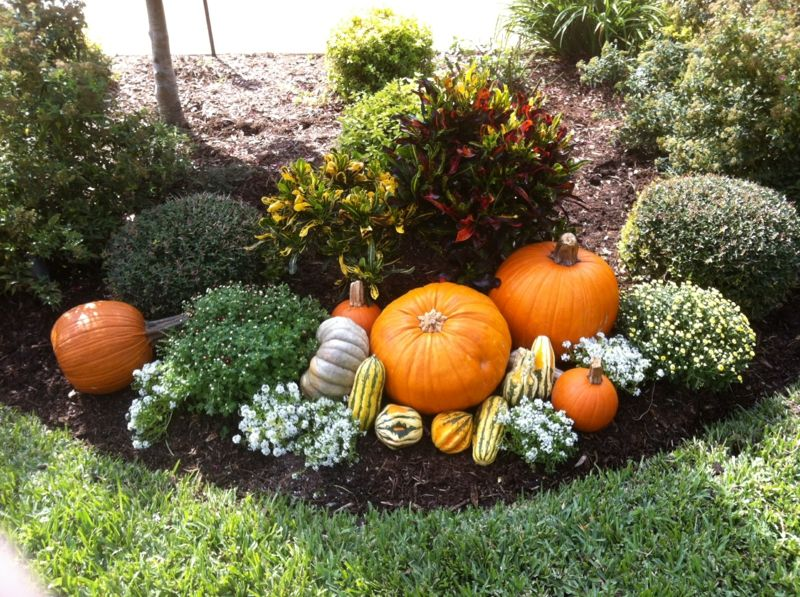 Dekorieren im Herbst – Verteilen Sie Kürbisse zwischen den Büschen #herbstdekoeingangsbereich