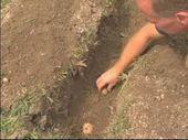 How To Grow Potatoes : How to Prepare Potatoes for... #Grow #Potatoes #Prepare #growingpotatoes