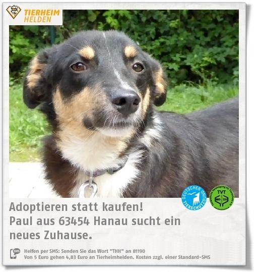Paul Aus Dem Tierheim Hanau Hat Mit Seinen 1 5 Jahren Noch Nicht Viel Schones Erlebt Https Www Tierheimhelden De Hund Tierhe Tierheim Tiere Hunde