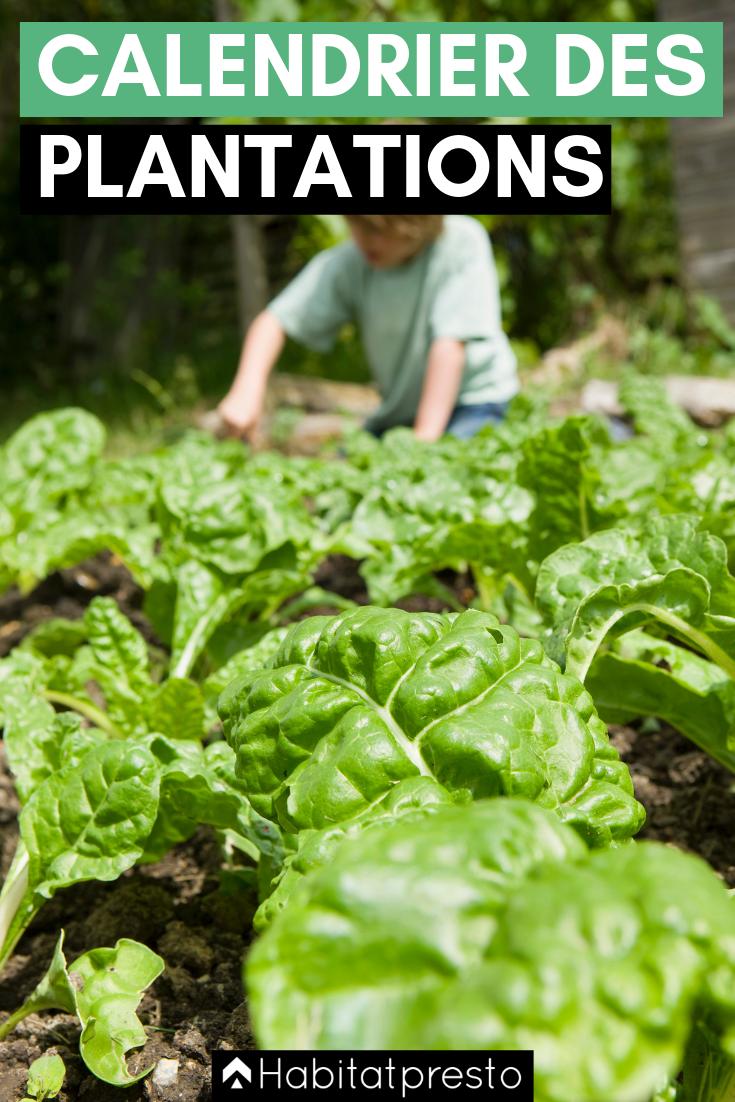 11++ Que planter au jardin en juillet aout inspirations