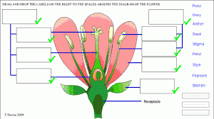 Flower labeling drag and drop flash drag the names to the correct flower labeling drag and drop flash drag the names to the correct spaces around the ccuart Image collections