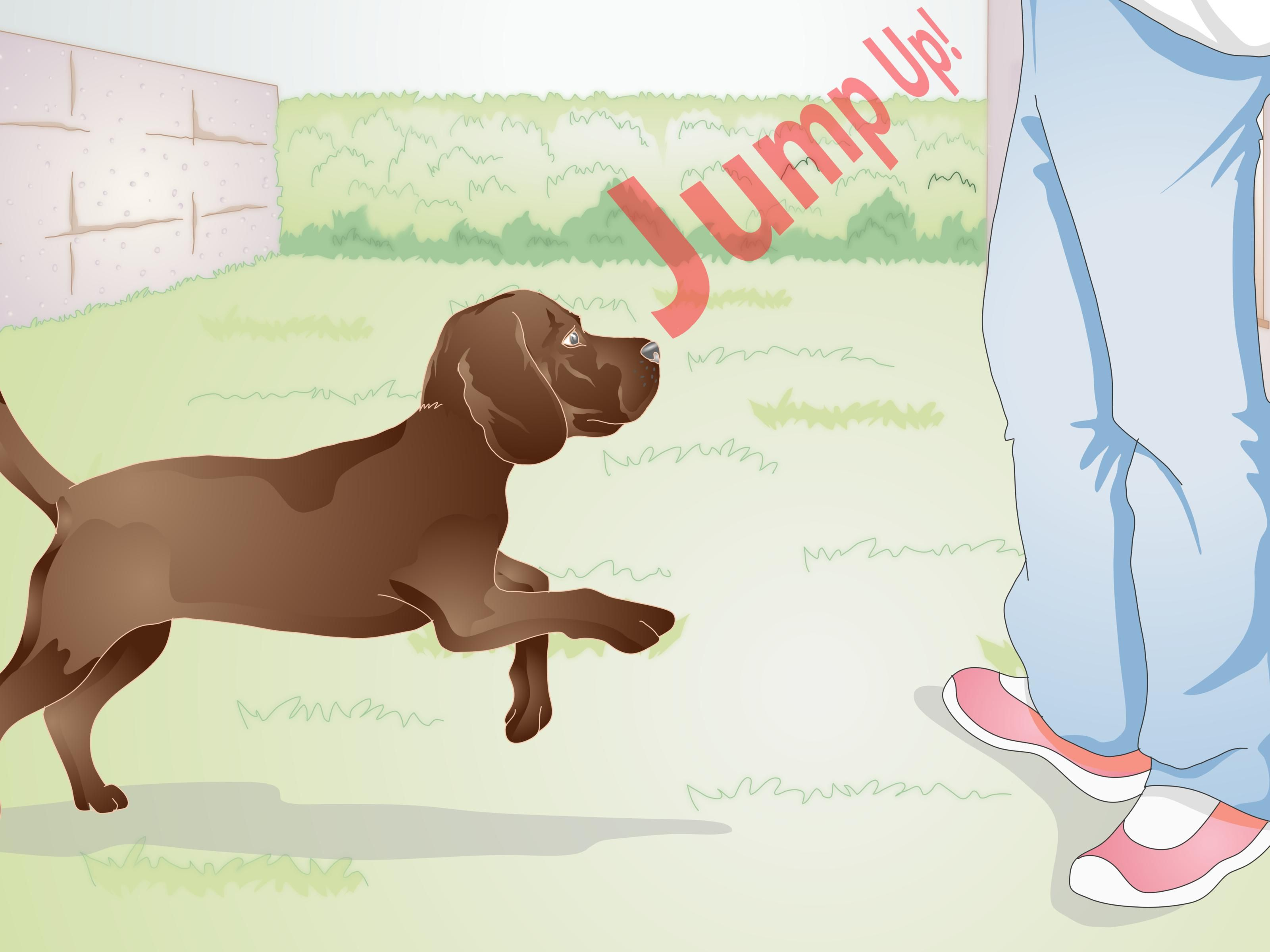 Training a dog to stand up takes patience, but it's well worth it. Before teaching your dog to stand, you should familiarize him or her with a marker sound and find a treat your doggie likes. When you're ready to train your dog to stand,...