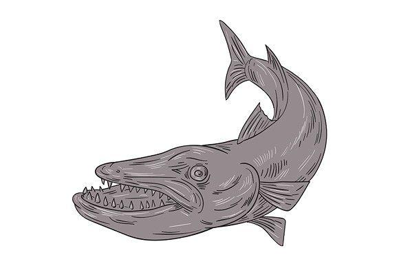 Barracuda Swimming Down Drawing Retro Illustration Drawings