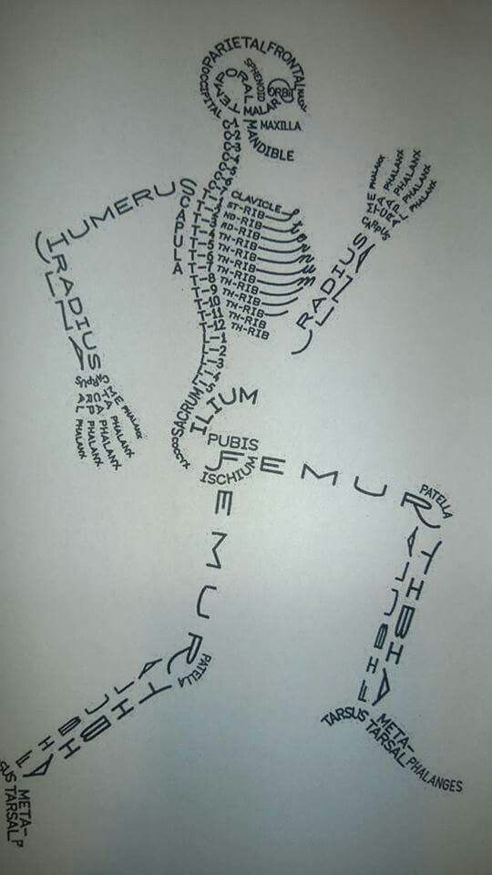 Bones Skeleton With All The Bone Names So Cool Material De