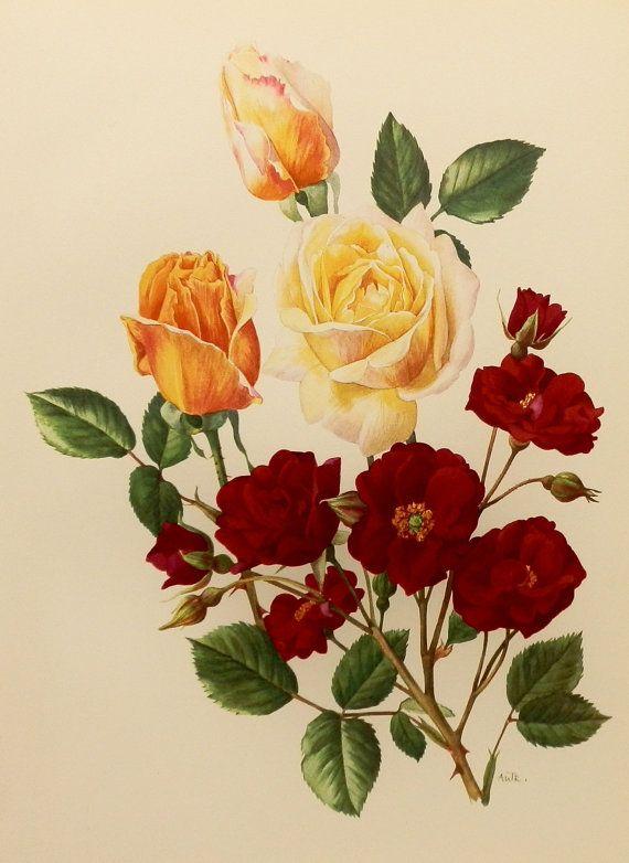 1960s Velvet Red Favorite Rose Flower Print Shabby Chic Decor France Vintage Botanical Illustration