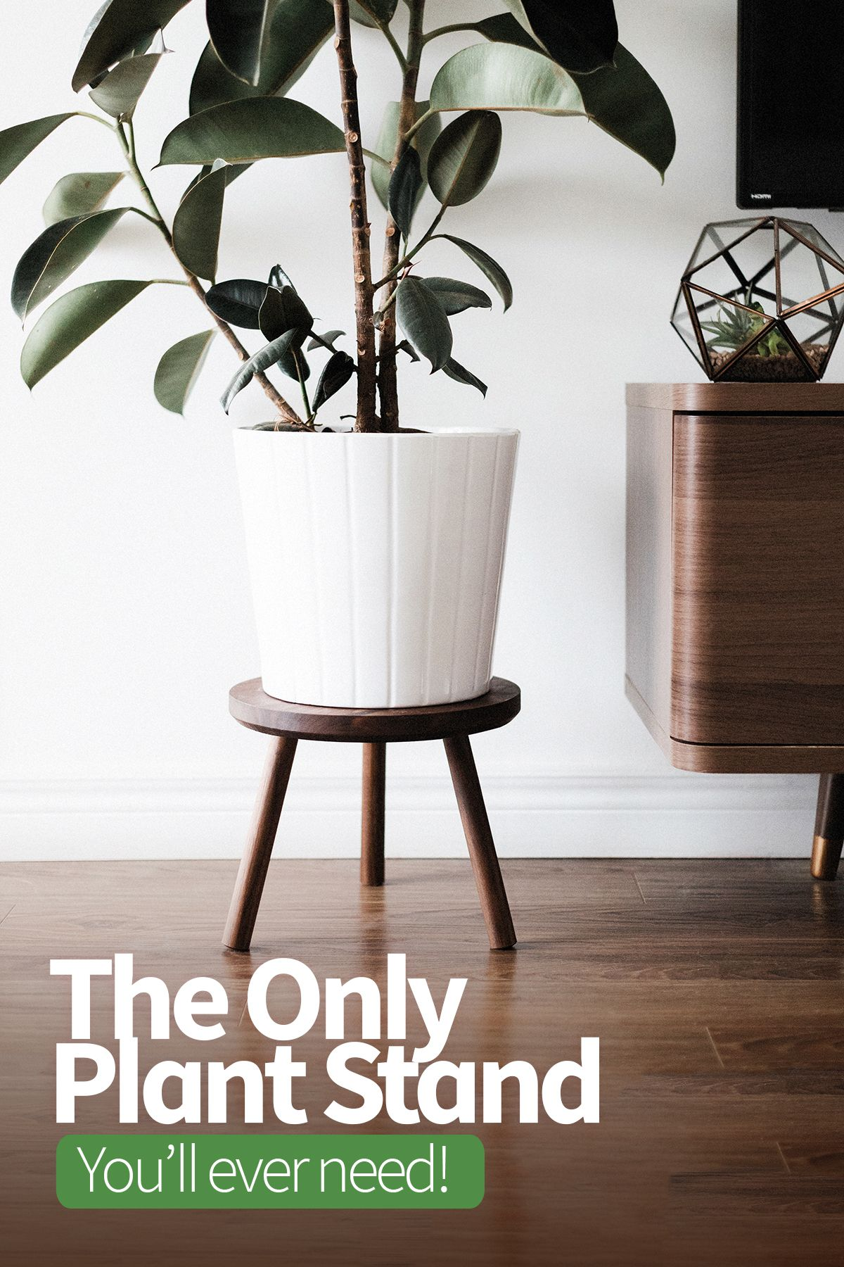 The Perfect Mid Century Modern Plant Stand Fits Such A