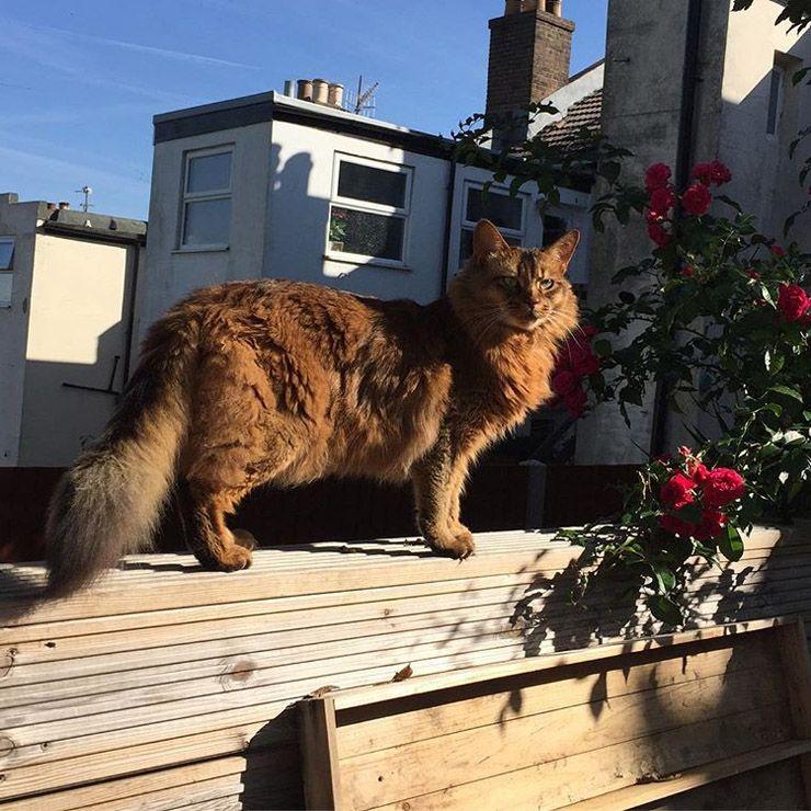 My Little Lion Wild Cat Baby Cats Pet Remembrance Cat Lovers
