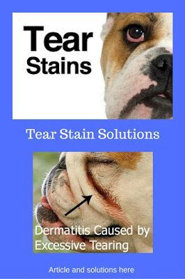 Finally A Remedy For Yeast Ear Infections In Your Dog Tear
