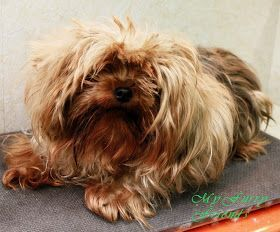 Pet Grooming: The Good, The Bad, & The Furry: Bathing/Clippi…