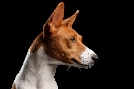 Pin Auf Allergiker Hunde Rassen Fur Allergiker Geeignet