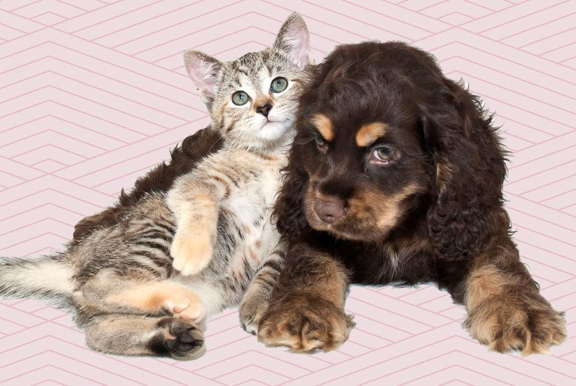 Do These 3 Things Before Adopting A Pet Dog Activities Pet