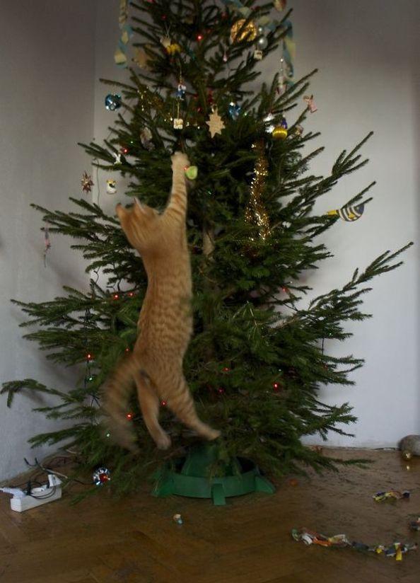 Cats Vs Christmas Trees.Cats Vs Christmas Trees 33 Pics Pooh Doodles Cat
