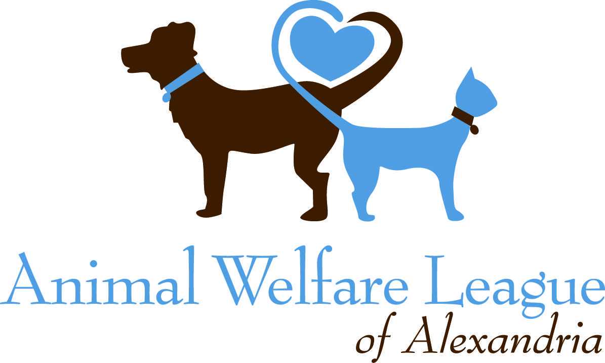 Black Friday Pet Adoption Animal Shelter Animal Welfare League Animals