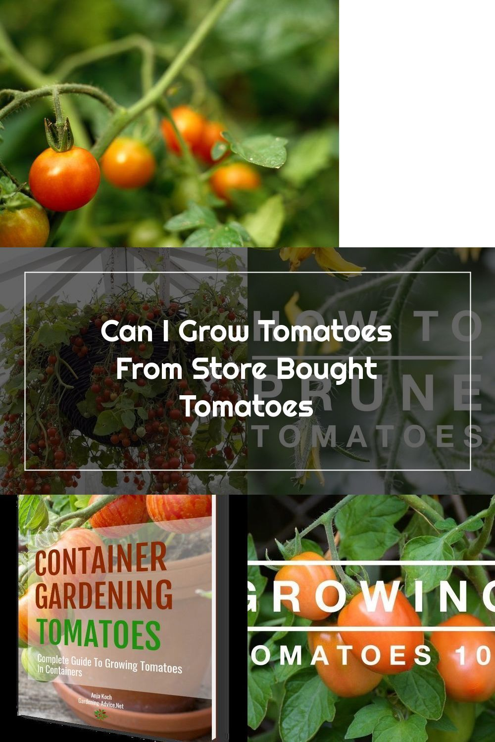 Can I Grow Tomatoes From Store Bought Tomatoes Ehow In 2020 Growing Tomatoes Tomato Container Gardening Growing