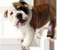West Boca Veterinary Center Local Veterinarians In Boca Raton Florida Home Pet Clinic Animal Hospital Pet Vet