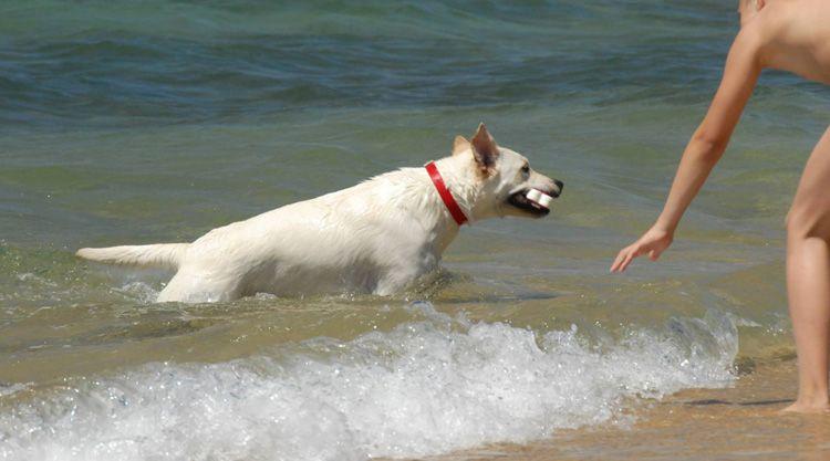 Spiagge Per Cani In Sardegna Ecco Tutte Le Dog Beach Dell Estate