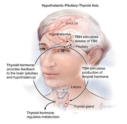 How To Naturally Treat Subclinical Hyperthyroidism