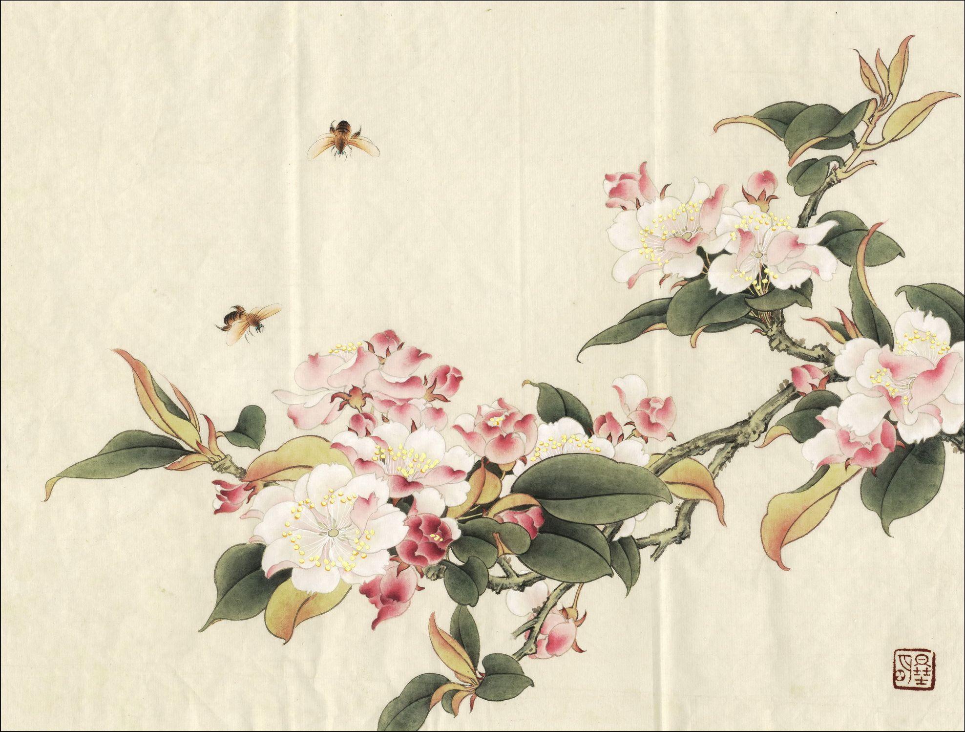 临余致贞西府海棠 Begonia Flowers 한국화 꽃