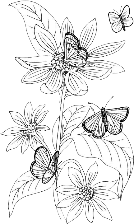 Butterfly Coloring Pages 17 Purple Kitty Butterfly Coloring Page Coloring Pages Adult Coloring Pages