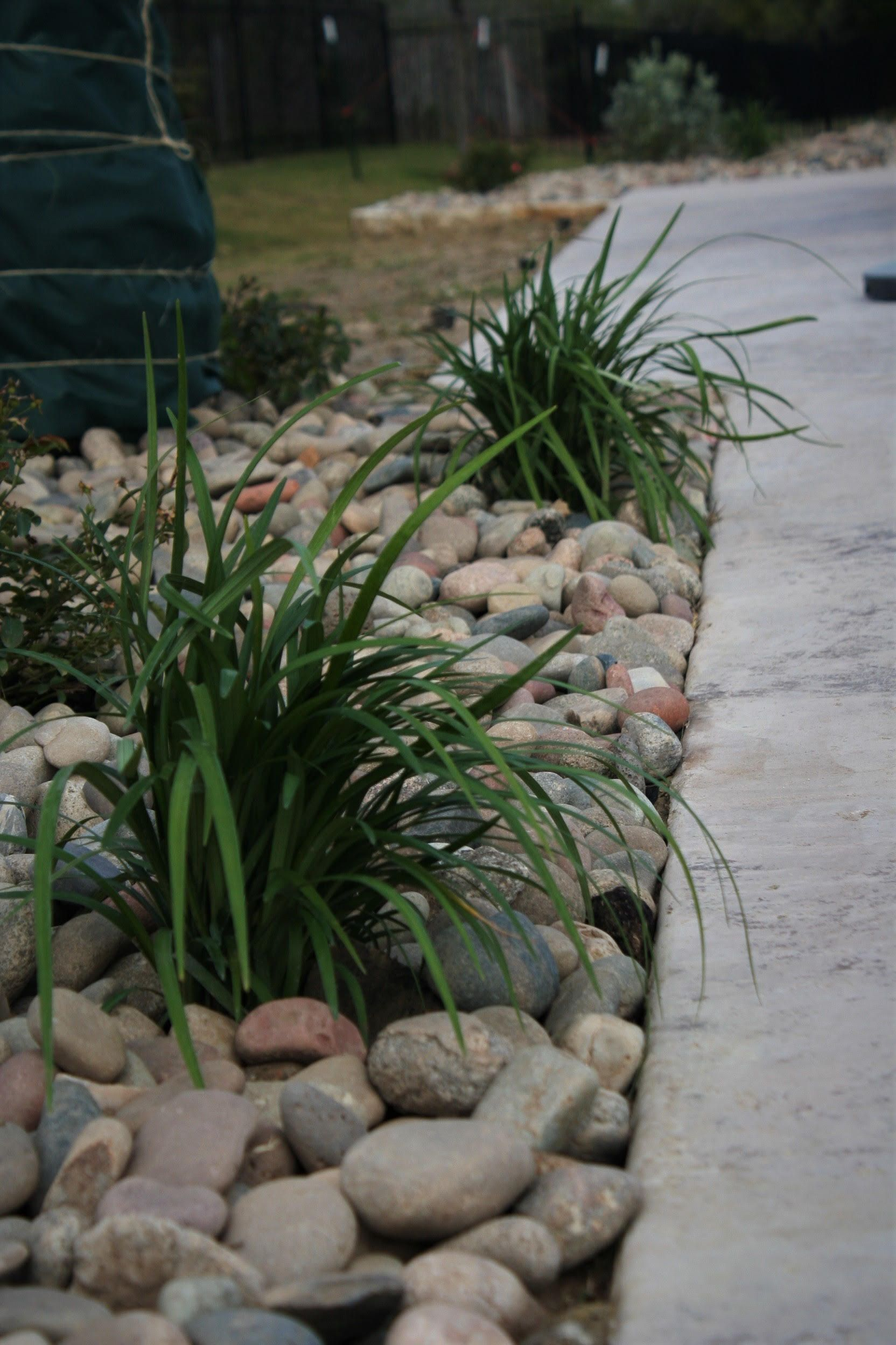 giant liriope in colorado river rock landscape design on beautiful front yard rock n flowers garden landscaping ideas how to create it id=67224