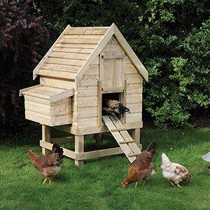 Backyard Chicken Coop crafts