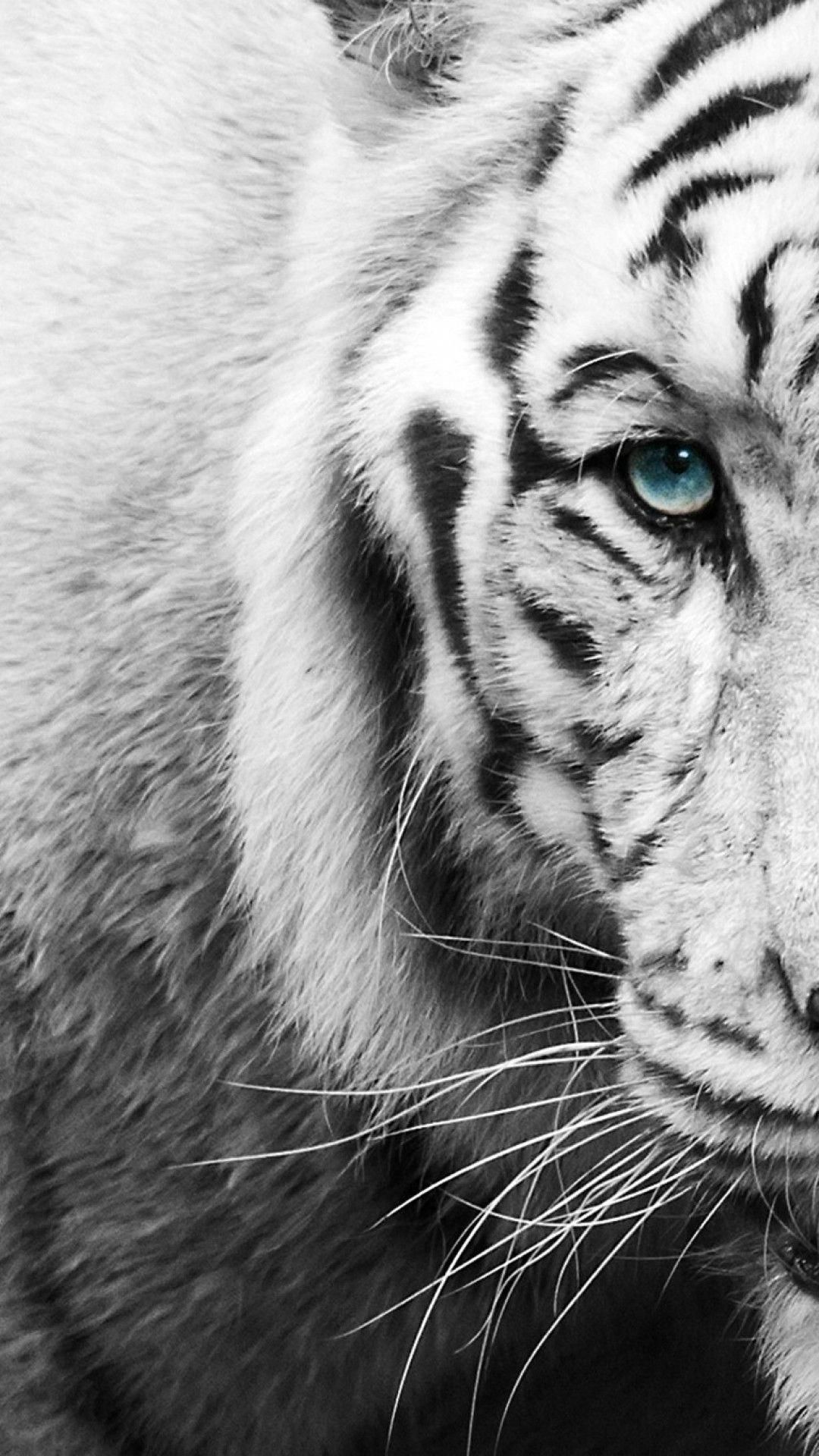 White Tiger Black And White Wallpaper Iphone Tiger Wallpaper Tiger Wallpaper Iphone