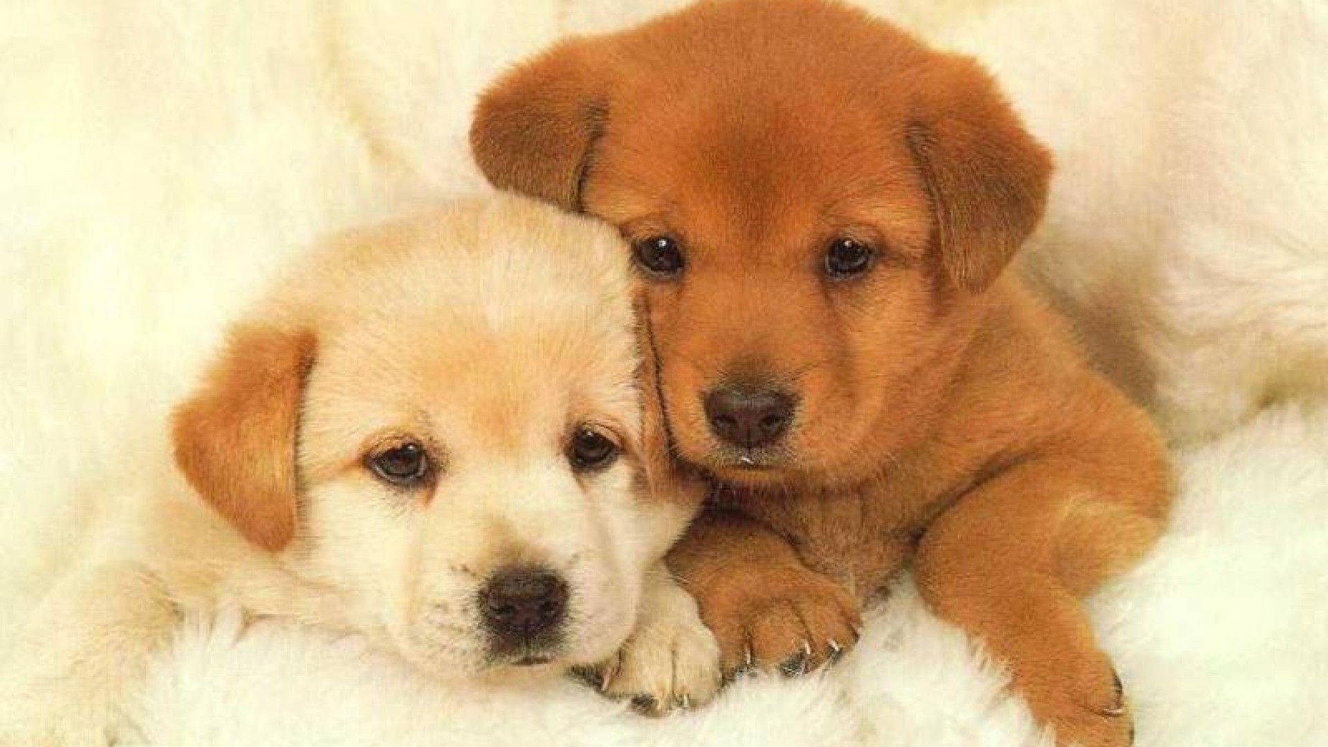 animal wallpapers : puppies backgrounds baby puppies backgrounds