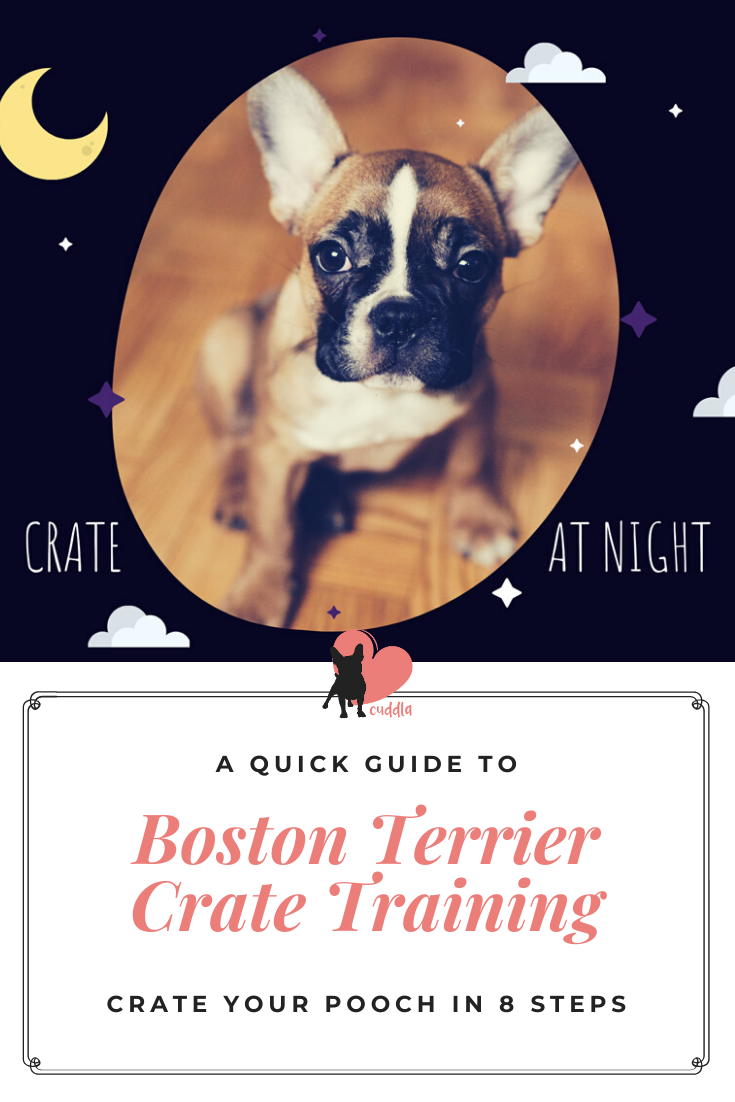 Boston Terrier Crate Training In 8