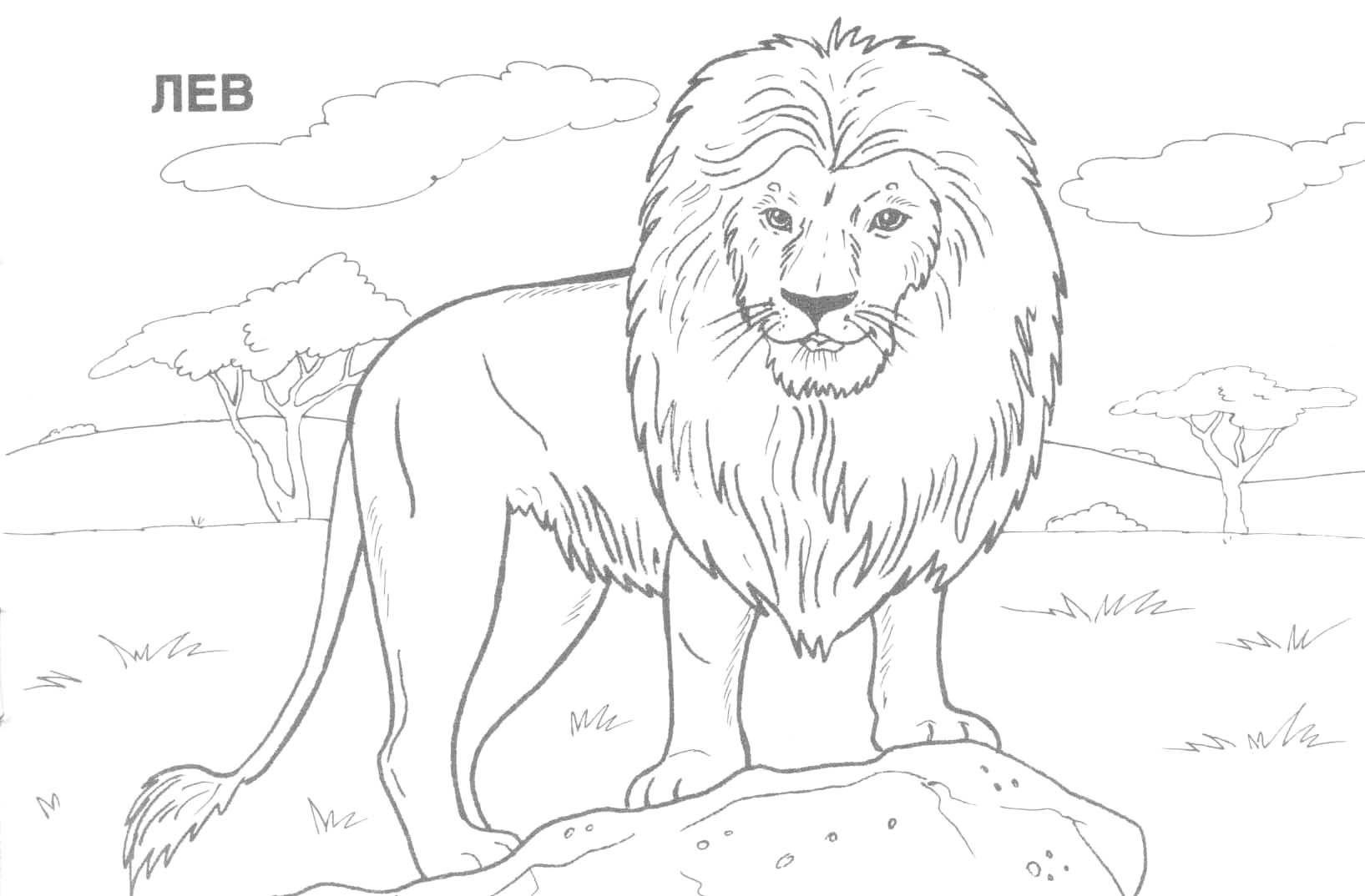 Wild Animal Coloring Pages Wild Animals Coloring Pages 30 Next