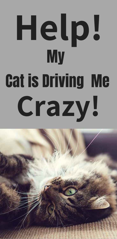Help My Cat Is Driving Me Crazy Cat Behavior Problems Cat Behavior Drive Me Crazy