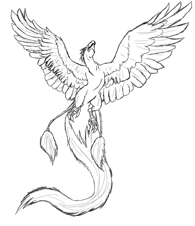 Realistic Phoenix Coloring Pages Coloring Pages Artist Sketches Phoenix Drawing