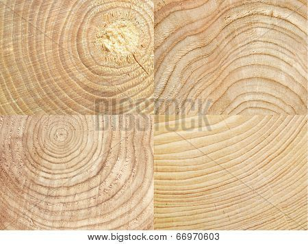 Cut tree log set. Wood texture background poster #woodtexturebackground Cut tree log set. Wood texture background Poster #woodtexturebackground