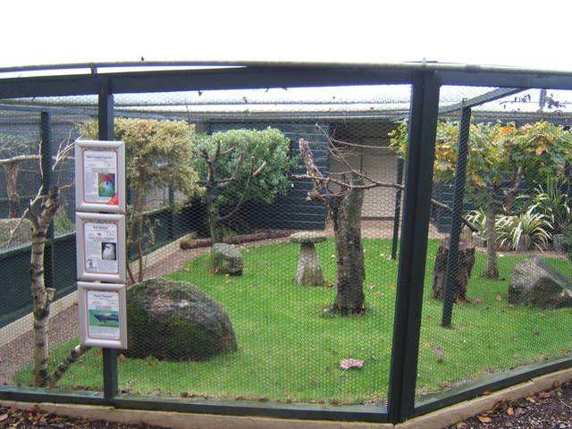 Parrot Aviary A large outdoor aviary houses many of