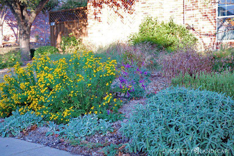 Rain Garden Gallery   Dubberley Landscape   Plano, Texas