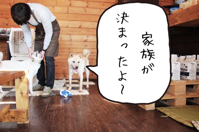 保護犬と出会える つくばの キドックスカフェ は 若者たちの自立も目指してます Happy Living 削ぎ家事研究室 Powered By ライブドアブログ 保護 犬 里親