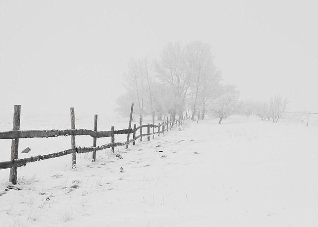 winter, nature, season, trees, sky, snow