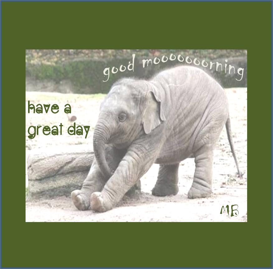 Happy Elephant Good Morning Cute Good Morning Happy Elephant Good Morning Images