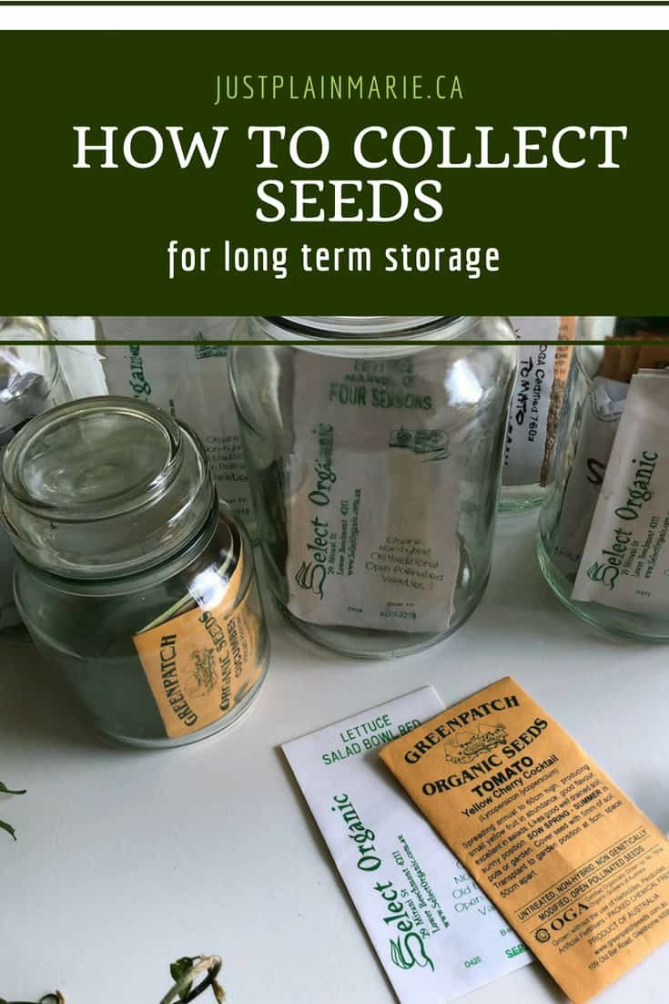 How to collect seeds for long term storage long term