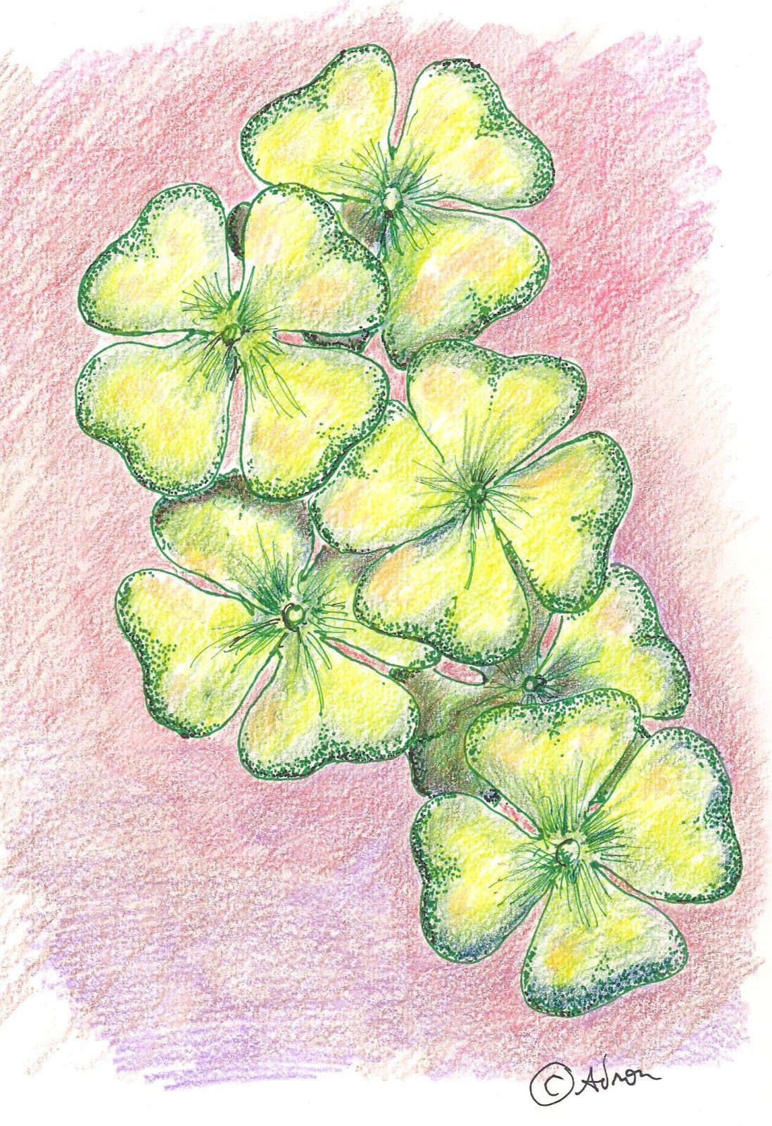 How To Draw Worksheets For The Young Artist How To Draw A Four Leaf Clover