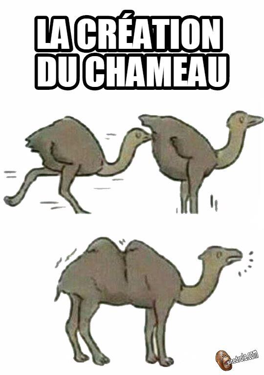 """Résultat de recherche d'images pour """"humour chameau"""""""